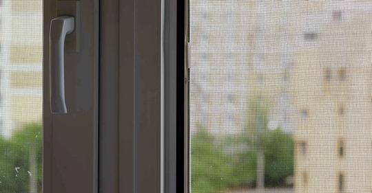 虫の侵入を防ぐ正しい窓の開け方